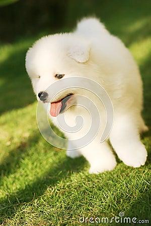Grappig puppy