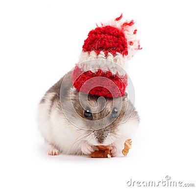 Grappige hamster