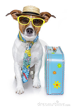 Grappige hond als toerist