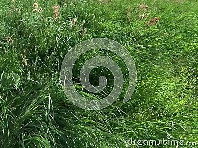 Gras bewegt sich mit dem Wind stock video