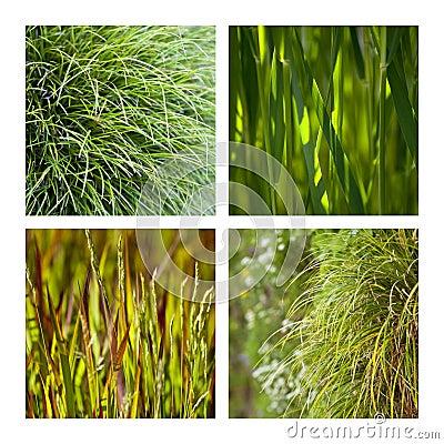 Gras und Büschel
