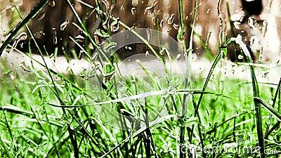Gras und Regen stock video