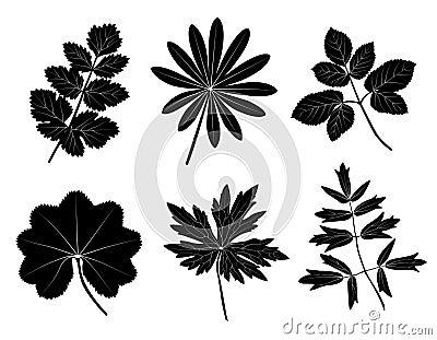 Grasblätter