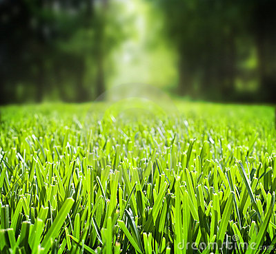 Free Grass Stock Photography - 15914932