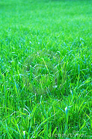 Free Grass Royalty Free Stock Images - 5901359