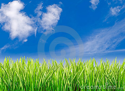 Grass against cloudy blue sky