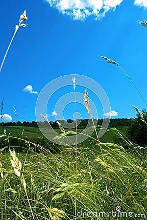 Free Grass And Sky Stock Photos - 10691103