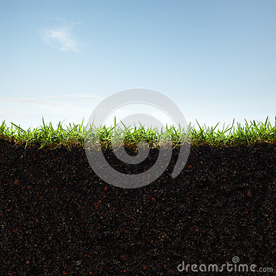 Free Grass And Soil Stock Image - 29024711