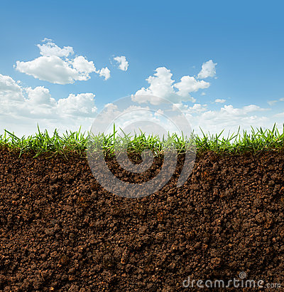 Free Grass And Soil Royalty Free Stock Photography - 42561967