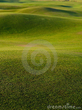 Grass, background green golf course.
