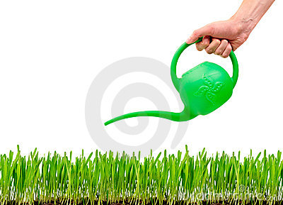 Grass being watered with watering can