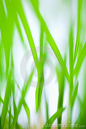 Grass blades abstract