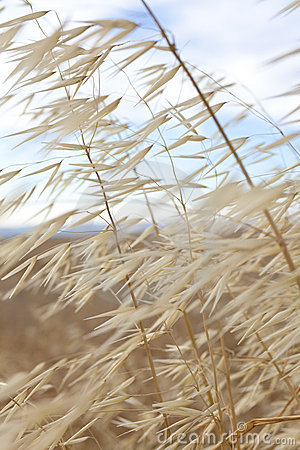 Free Grass Blowing In The WInd Stock Photo - 14857200