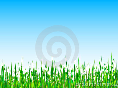 grass on a blue sky background. vector
