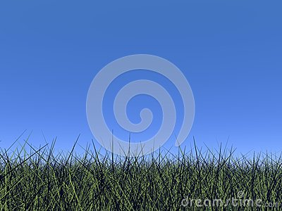 Grass and blue sky - 3D render