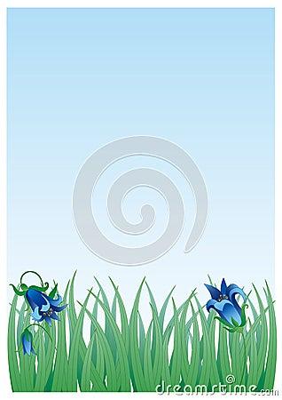 Grass&bluebells
