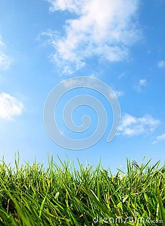 Grass and Bright Blue Sky