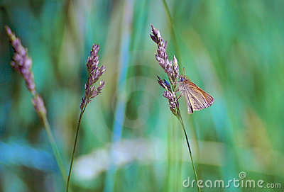 Grass with butterfly