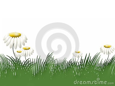 Grass and camomiles