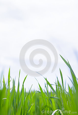 Grass close-up.