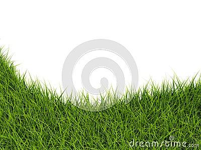 Grass closeup