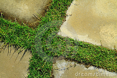 Grass and concrete floor