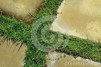 Grass and concrete floor