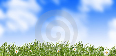 Grass and daisies - meadow