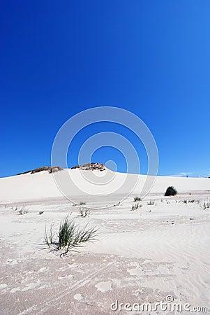 grass on the desert