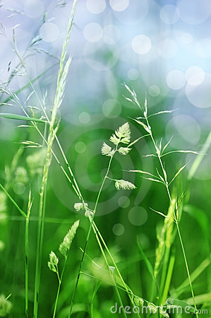 Grass in detail with bokeh