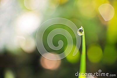 Single drop of grass on stem