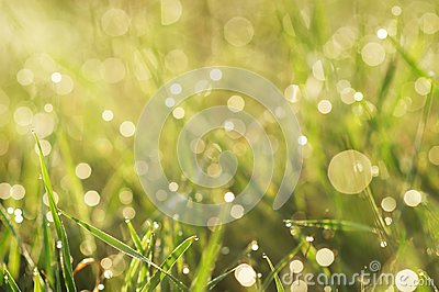 Grass with dew closeup