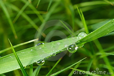 Grass Dew Detail
