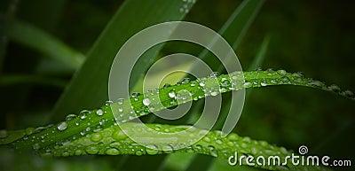 Grass drops
