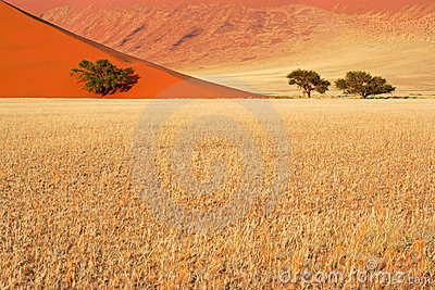 Grass, dune and trees, Sossusvlei, Namibia