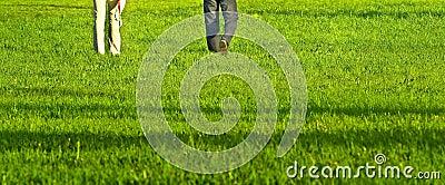 Grass-field