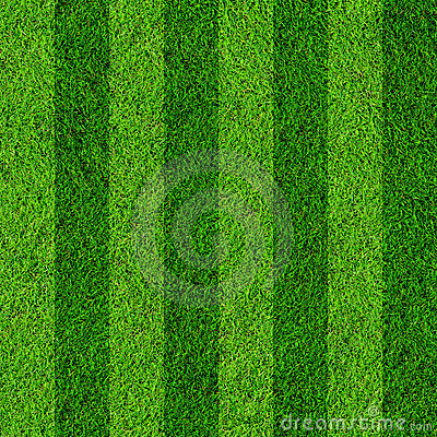 Free Grass Field Background Stock Images - 19843964