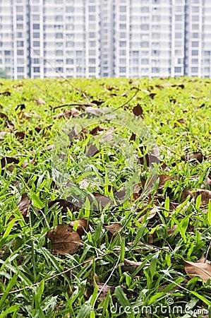 Grass field foreground