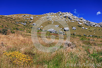 Grass field with rock and mountain background