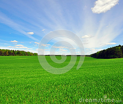 Grass field and sky
