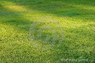 Grass field with sunlight spots