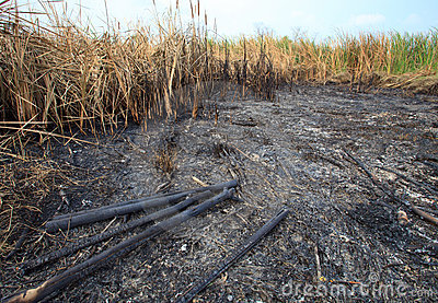 Grass field was burned