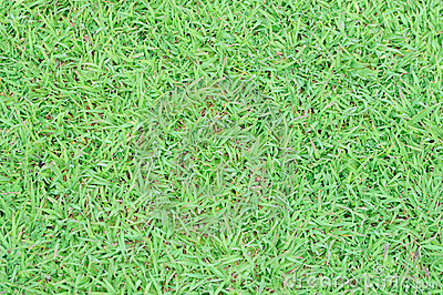 Grass floor in the garden
