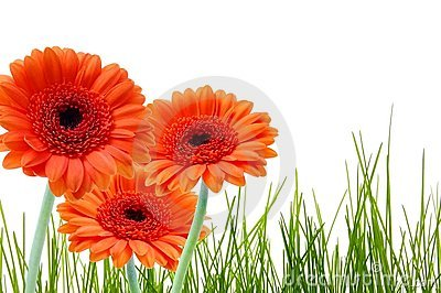 Grass Flower And Copyspace Stock Photos - Image: 13885453