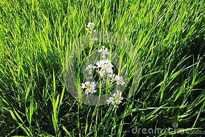 Grass and flowers
