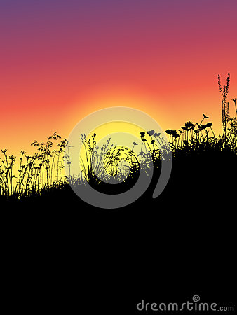 Grass and flowers at sunset