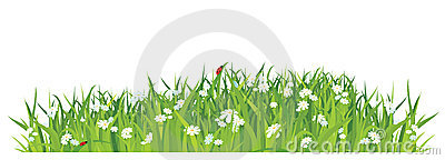 Grass and flowers on white background / vector