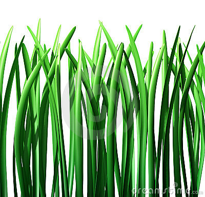 Grass green lawn isolated