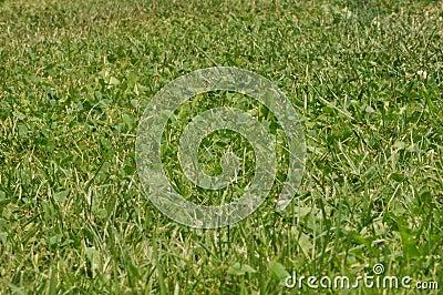 Grass green texture