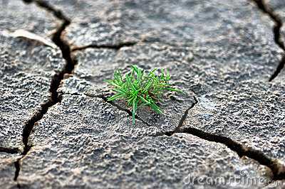 Grass grow up in dry soil
